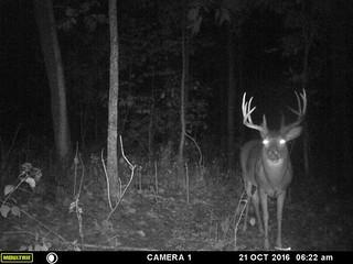 Kentucky Whitetail Hunt 31