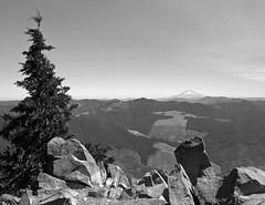 Atop a rock with a clearcut view (Ben Amstutz) Tags: tablerock rock rocks tree forest oregon mountains wildernesstablerockwilderness mthood hood clearcut logging