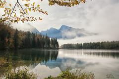 Almsee <3 (Claudia Brockmann) Tags: natur nature wasser water autumn herbst fog mountain mountains berge baum bume nebel tree trees almsee austria sterreich reflections spiegelung