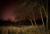 In a swinging state (salahudin's paragnomen) Tags: space kraków krakoff night longexposure light dark scary mood pink gloom moody tree trees grass landscape dream weird strange darkness canon branches swing swingingstate vision nature fauna poland