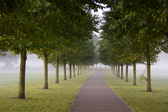 Trees in the autumn mist: Pontcanna Fields, Cardiff (Dai Lygad) Tags: trees mist lines autumn cardiff path pontcanna pontcannafields morning green autunno flickr creativecommons attributionlicence attributionlicense freetouse stockphoto stockimage herbst view automne light photo photograph photography image canon eos 550d camera misty weather outdoors outdoor walktowork paysdegalles tranquility serene jeremysegrott jeremy segrott dailygad fall parkland treelined urbanpark blackweir space atmospheric geotagged uk walesuk caerdydd caerdyddwales picture