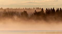 Foggy sunrise at Lake Jaurakkajärvi (Pudasjärvi, 20160708) (RainoL) Tags: 2016 201607 20160708 fin finland fog fz200 geo:lat=6515951337 geo:lon=2767696382 geotagged jaurakkajärvi july lake landscape mist morning nature pohjoispohjanmaa pudasjärvi summer sunrise