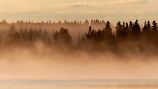 Foggy sunrise at Lake Jaurakkajärvi (Pudasjärvi, 20160708)
