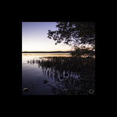 Mangrove silhoutte - Speers Point (ssoross1) Tags: lakemacquarie speerspoint