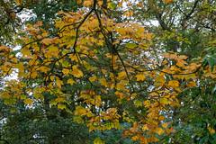 Moorlands (alh1) Tags: yorkshirewildlifetrust naturereserve england northyorkshire york sycamore