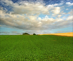 Green field (Katarina 2353) Tags: landscape summer katarina2353 katarinastefanovic