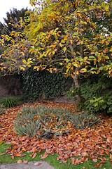 Magnolia leaves (Caulker) Tags: canonspark magnolia 0812016