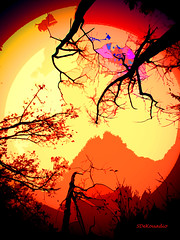 Autumn Trees silhouette (Stephenie DeKouadio) Tags: canon outdoor autumn abstract abstractart art artistic color colour silhouette trees branches