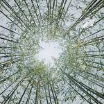 竹影和诗瘦,梅花入梦香。 #bamboo #bambooforest #phoneonly #onlyphone #phonecamera #hangzhou #千岛湖 thumbnail