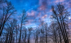 Slylight euphoria (Images by Christie  Happy Clicks for) Tags: clouds sunset trees tree nikon d5200 bc canada
