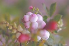 bouquet d'automne (kiareimages1) Tags: automne autumn autunno bouquetsdefleurs fleurs flowers fiori flores fleurssauvages fioriselvaggi sfumato macro macroflowers images nature n