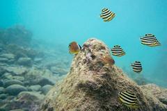 20150816-DSC_8300.jpg (d3_plus) Tags: sea sky fish beach japan scenery underwater diving snorkeling  shizuoka    apnea izu j4  waterproofcase    skindiving minamiizu       nikon1 hirizo  1030mm  nakagi 1  nikon1j4 1nikkorvr1030mmf3556pdzoom beachhirizo misakafishingport  1030mmpd nikonwpn3 wpn3