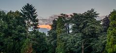 Stadtpark Hamburg (prose86) Tags: autumn trees nature forest hamburg stadtpark