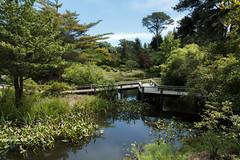 Mytoi pond (tgpotterfield) Tags: usa massachusetts marthasvineyard edgartown chappaquiddick
