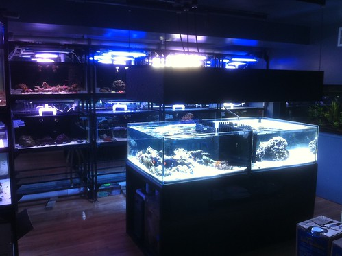 Custom Fish Systems - Fish Store - NYC - 1