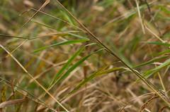 IMGP0897.jpg (GSankary) Tags: fall farm farms ruralscenes farmscenes