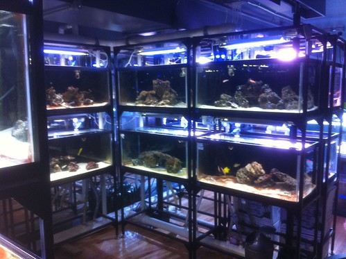 Custom Fish Systems - Fish Store - NYC - 9
