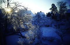 Blek vintersol (Ken-Zan) Tags: trees winter sun garden sweden scanned eskilstuna kjell wintersun kenzan eftermiddag bltimmen gillbergavgen ljunghav