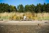 Stump (timoppi) Tags: nature finland helsinki outdoor balticsea syksy vuosaari kallahti ulkoilu
