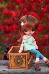 Dal Overboard! (CornflowerBlue07) Tags: autumn fall twins dal groove burningbush katoya