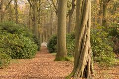 Clingendael-2.jpg (robbertladan) Tags: nikon den nederland natuur denhaag hague haag bos binnenhof the clingendael 2015 d7200
