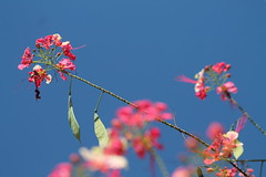 Bright colours (Geoff_B) Tags: pink blue sky thailand october maehongson unprocessed pinkyblue 2015