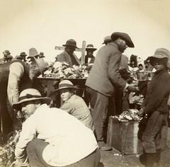 Springfontein Camp, c.1901.