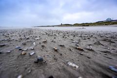 Juist Shells in the Wind (adlering) Tags: wind juist nordsee