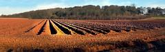 Whippenstall furrows (tina negus) Tags: winter panorama field earth lincolnshire soil plough furrows garm whippenstallhill