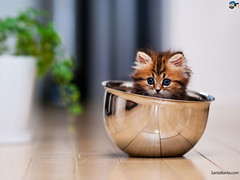 Kedili Sabahlar (thehayvan) Tags: cats love cat like kedi sevgi hayvan catlove canl sweetcats kedigiller catofistagram