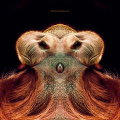 f o e (epiclectic) Tags: reflection animal photoshop mirror design graphic wildlife humor perspective manipulation images symmetry reflect symmetrical mutant twisted enhancement epiclecticcom epiflection epiflectionbyepiclecticcom
