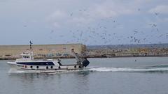 PORT DE BARCELONA (peleon III) Tags: barcelona portdebarcelona pescadors spain catalunya catalonia catalua gavines gaviotas