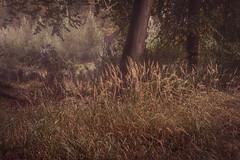 Woven (jellyfire) Tags: landscape landscapephotography sonnartfe55mmf18za sony sonya7r suffolk thetfordforest woodland autumn branches broadleaf copse deciduous ecology evergreen fir green growth leaves leeacaster life norfolk pine trees trunk woods wwwleeacastercom zeiss