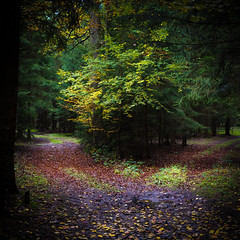 Weggabelung im Herbst, parting of the way in fall
