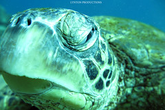 IMG_0128 copy (Aaron Lynton) Tags: lyntonproductions ocean turtle starfish maui hawaii canon g1x