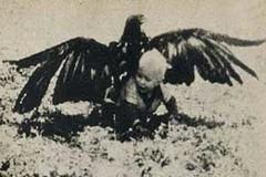 عقابی بچه ۳ سال و نیمه را شکار کرد. عاقبت این کودک حیرت انگیز است! (وبگردی) Tags: شکار عقاب کودک