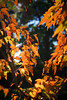 Autumn colour (judy dean) Tags: judydean 2061 sonya6000