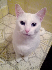 2014- Luna (teresamarkos) Tags: luna cat cats kitten kittens felines feline