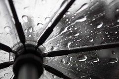 294/366 - Drench (Esko) Tags: 2016 october 366 365 366project 366challenge 365project 365challenge rain raindrops water naturalgrey rainy weather nature