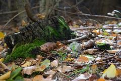 DSC_0504 (Pter_Szab) Tags: mtra matra hungary nature autumn colours mountains galyateto galyatet forest hiking nationalpark landscape