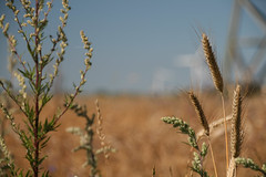 20130720_IMG_0092 (anriro96) Tags: elements heemsen nienburg feld ernte gras getreide blau blue sky rohrsen weser sun summer