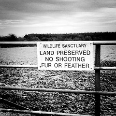 No Shooting (only photographs allowed) (JulieK (finally moved to Wexford)) Tags: sign iphone5 squareformat bw blackandwhite monochrome hss signsunday gate fence wexford ireland irish 2016onephotoeachday