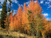 Aspens 1 (PhotoBobil) Tags: grandlake colorado fall aspens