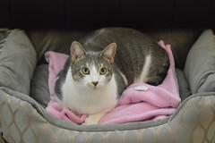 DSC_0087 (kaymann+l+woo) Tags: catsofinstagram cats cute