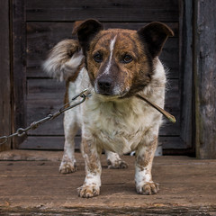 Rikis (paulius.malinovskis) Tags: sony sonya7r summer lithuania countryside nature vacation cottage dog cute eyes rikis shy