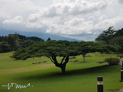 Marriott San Jos, Golf Camp, Flamboyant Tree, Costa Rica (ssspnnn) Tags: golf golfcamp marriottsanjose marriott handicap delonixregia malinche flamboyant chivato josefino arboldelumbre arboldefuego spnunes nunes snunes spereiranunes samsung galaxys7 edge costarica sanjose