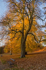 ( Chris  busy during the week for a while) Tags: bare tree naked autumn park bench yellow fall sun afternoon leaves undressing