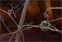 history, saundatti (nevil zaveri (thank you for 10 million+ views :)) Tags: zaveri people devotee india woman women karnataka yellamma saundatti temple worship photography photographer images photos blog stockimages photograph photographs nevil nevilzaveri stock photo saree pilgrims bangles prayer holy sacred wall abstract conceptual barb wire bow