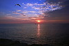 Por de sol em Quarteira/Algarve (Zéza Lemos) Tags: portugal praia pordesol puestadelsol quarteira algarve água aves areia ave natureza natur núvens nuvens sunset sol selvagem liberdade water mar