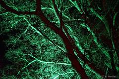 DSC04113 (Twareg) Tags: 2016 aboretum bpw enchanted forest westonbirt bathphotowalk gloucestershire england handheld night nightshot